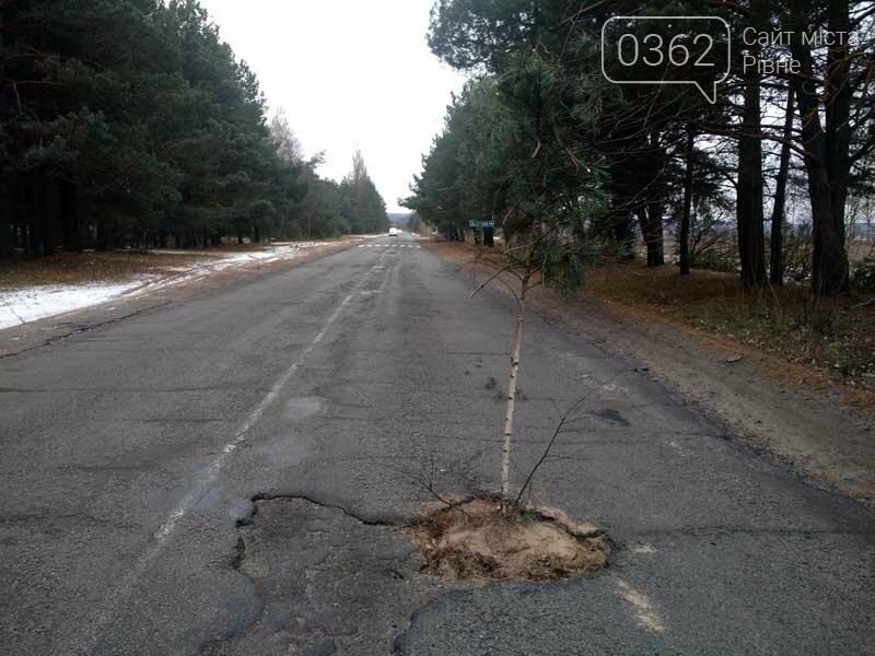 """Водії з Рівненщини посадили дерево посеред глибокої вибоїни. Оригінальне нагадування """"дорожникам"""" про потребу негайного ремонту , фото-1"""