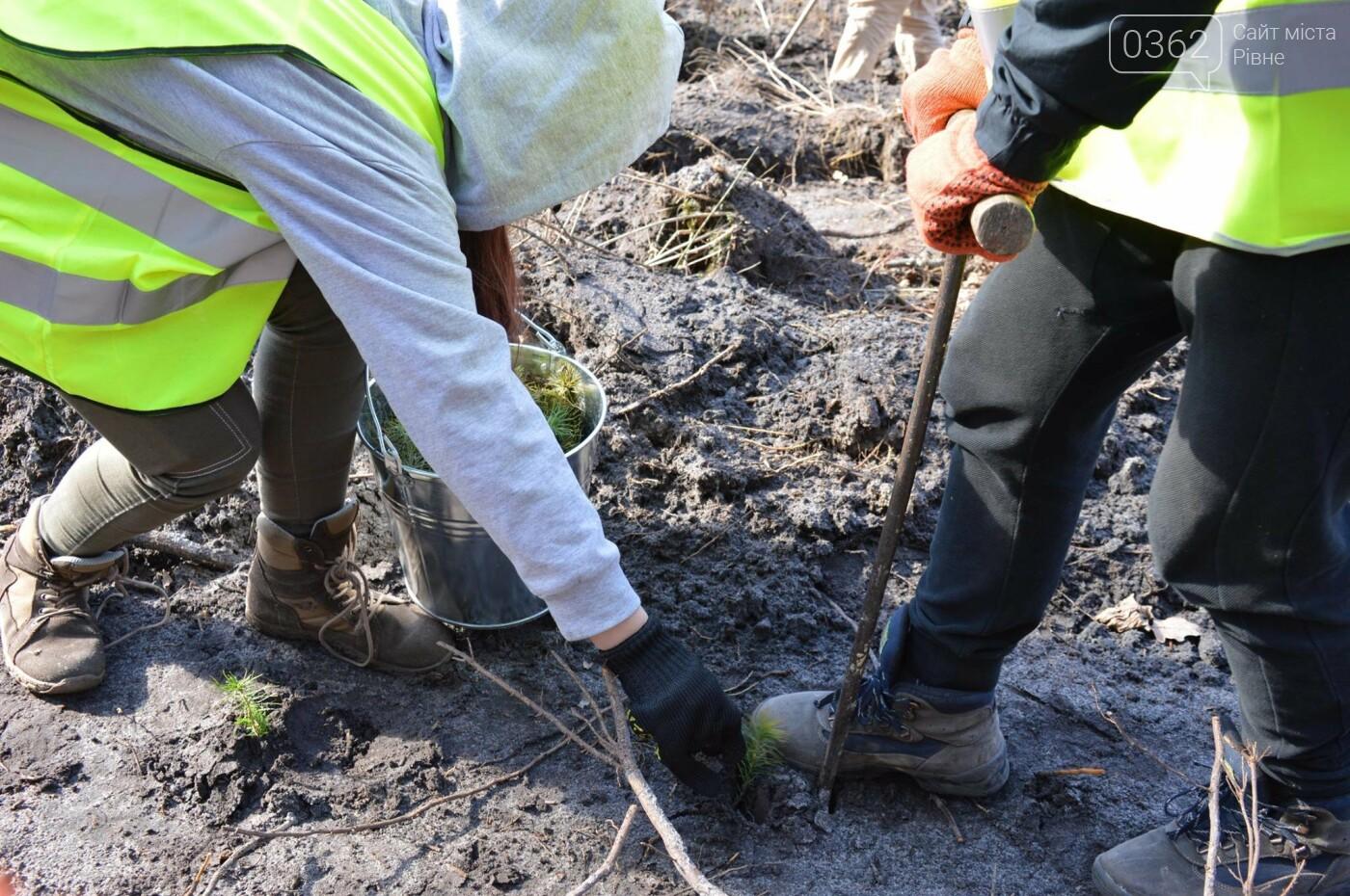 П'ятирічний хлопчик допомагав садити дерева в Олександрійському лісництві (ФОТО), фото-3