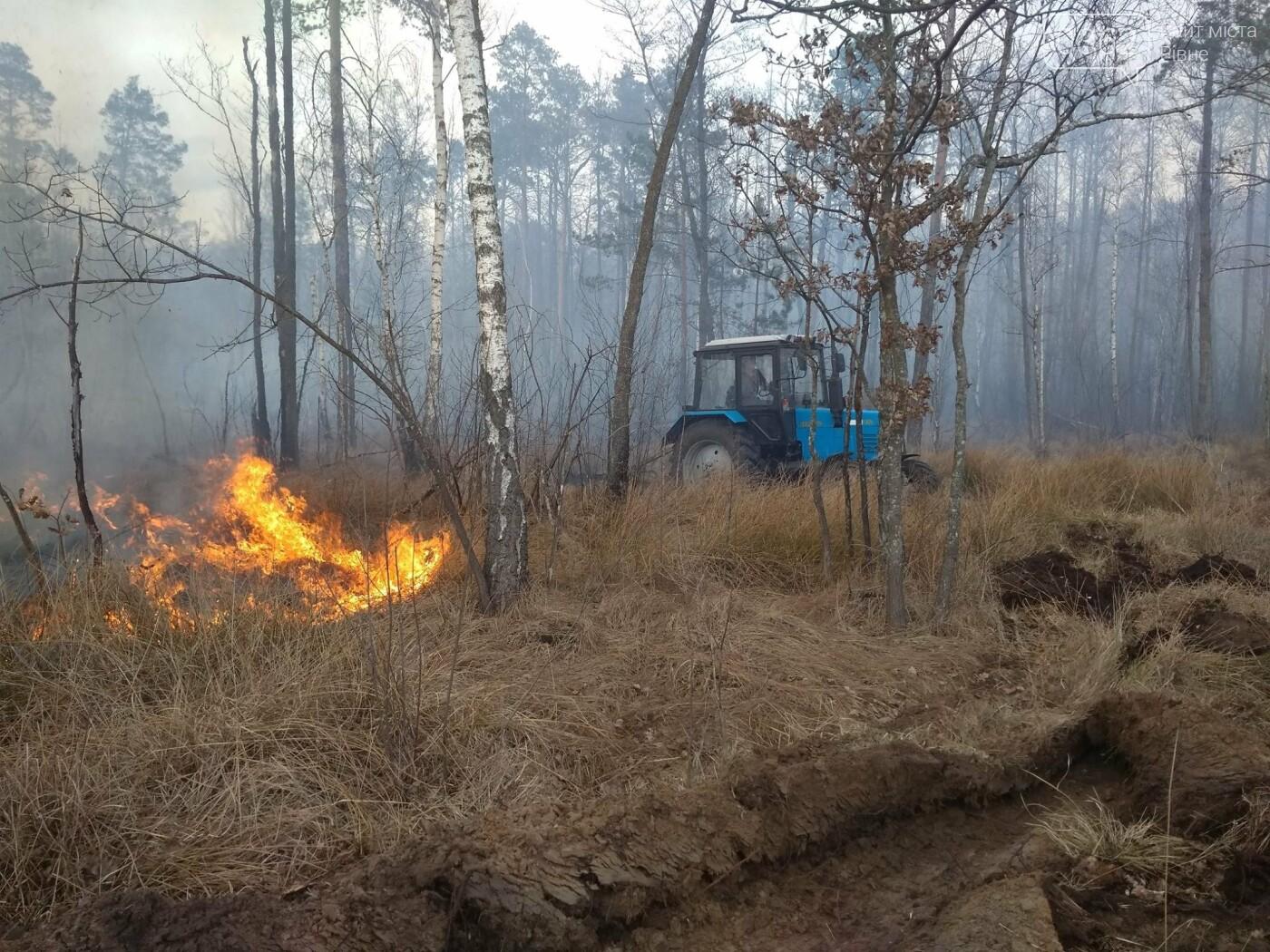 На Рівненщині палав ліс (ФОТО) , фото-1