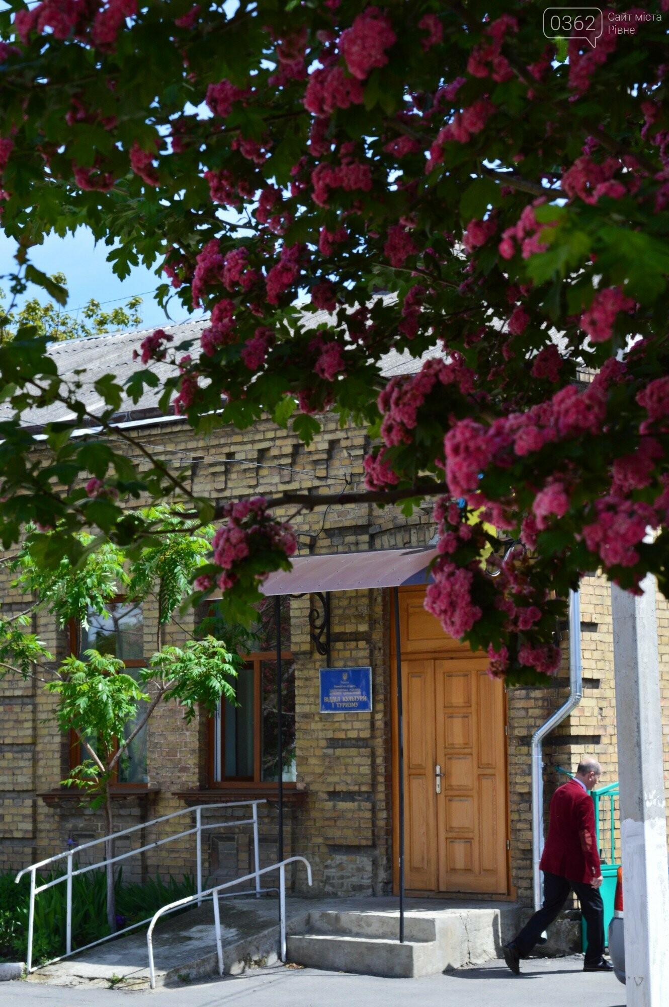У Здолбунові цвітуть унікальні дерева (ФОТО) , фото-11