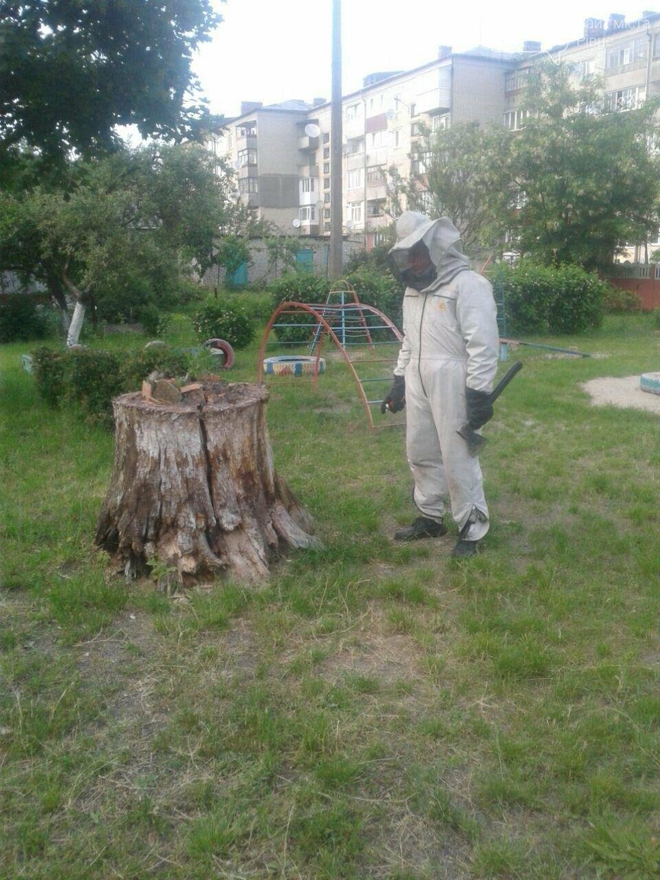 У дитсадку на Рівненщині виявили гніздо шершнів (ФОТО)  , фото-1