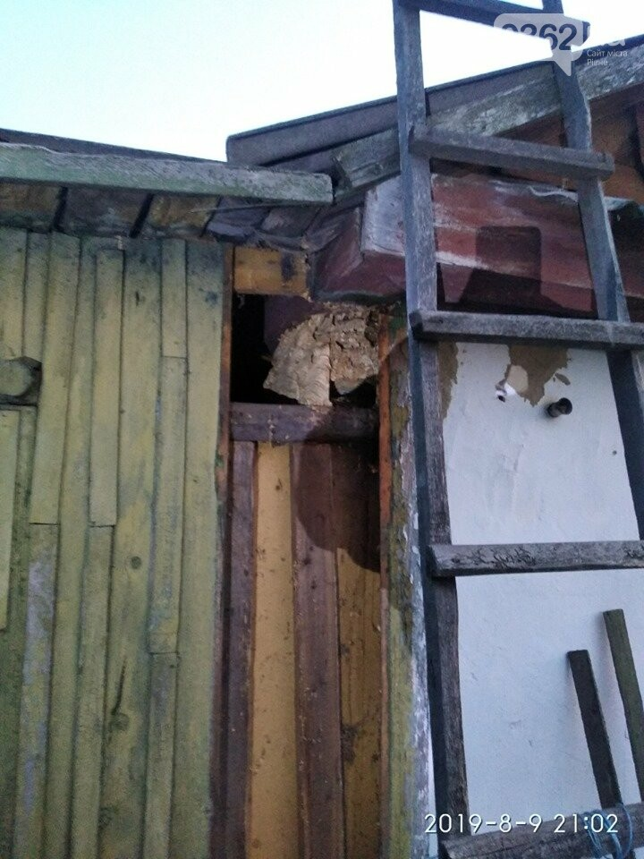 Чергове кубло небезпечних комах знищили на Рівненщині (ФОТО), фото-2