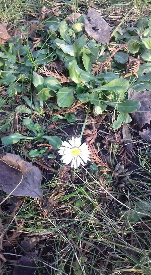 На вулиці січень, однак квіти у парку Рівного починають квітнути (ФОТО), фото-1