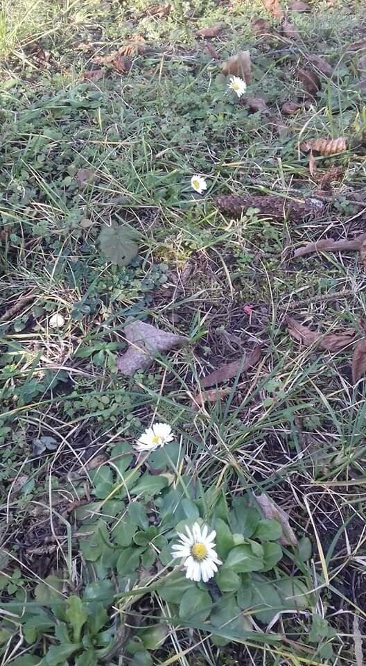 На вулиці січень, однак квіти у парку Рівного починають квітнути (ФОТО), фото-2