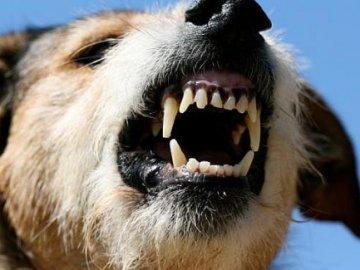 """Результат пошуку зображень за запитом """"скажена собака"""""""