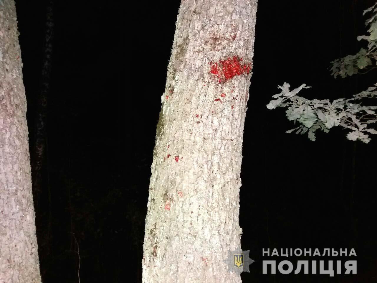 Авто розбите вщент, водій загинув: на Рівненщині Фольцваген врізався у дерево (ФОТО), фото-1