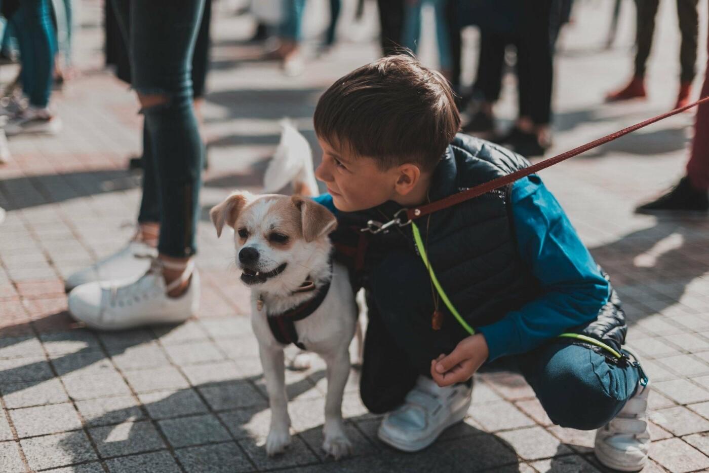 Разом з дітьми та домашніми улюбленцями: у Рівному пройшов Всеукраїнський марш за тварин (ФОТО), фото-3