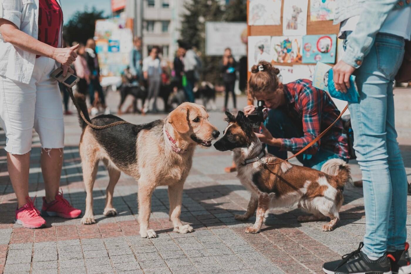 Разом з дітьми та домашніми улюбленцями: у Рівному пройшов Всеукраїнський марш за тварин (ФОТО), фото-13