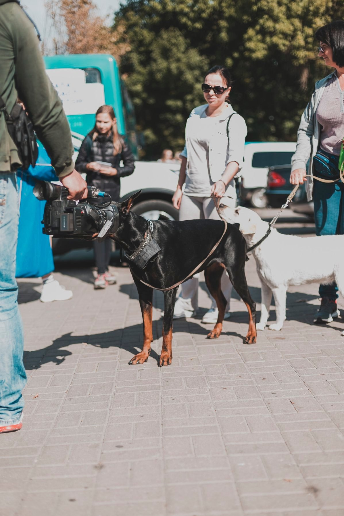 Разом з дітьми та домашніми улюбленцями: у Рівному пройшов Всеукраїнський марш за тварин (ФОТО), фото-17