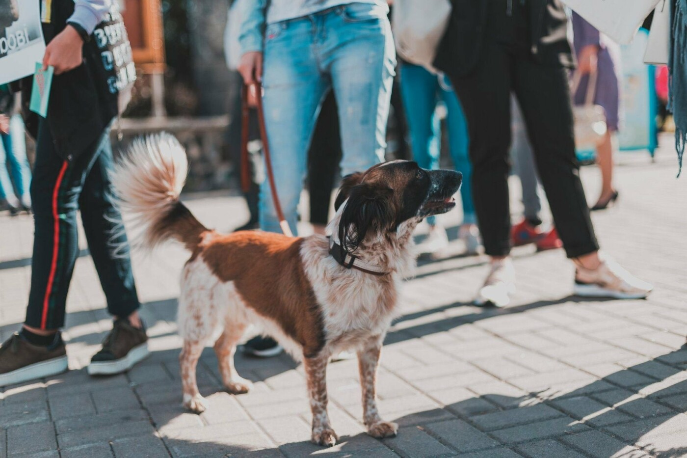 Разом з дітьми та домашніми улюбленцями: у Рівному пройшов Всеукраїнський марш за тварин (ФОТО), фото-7