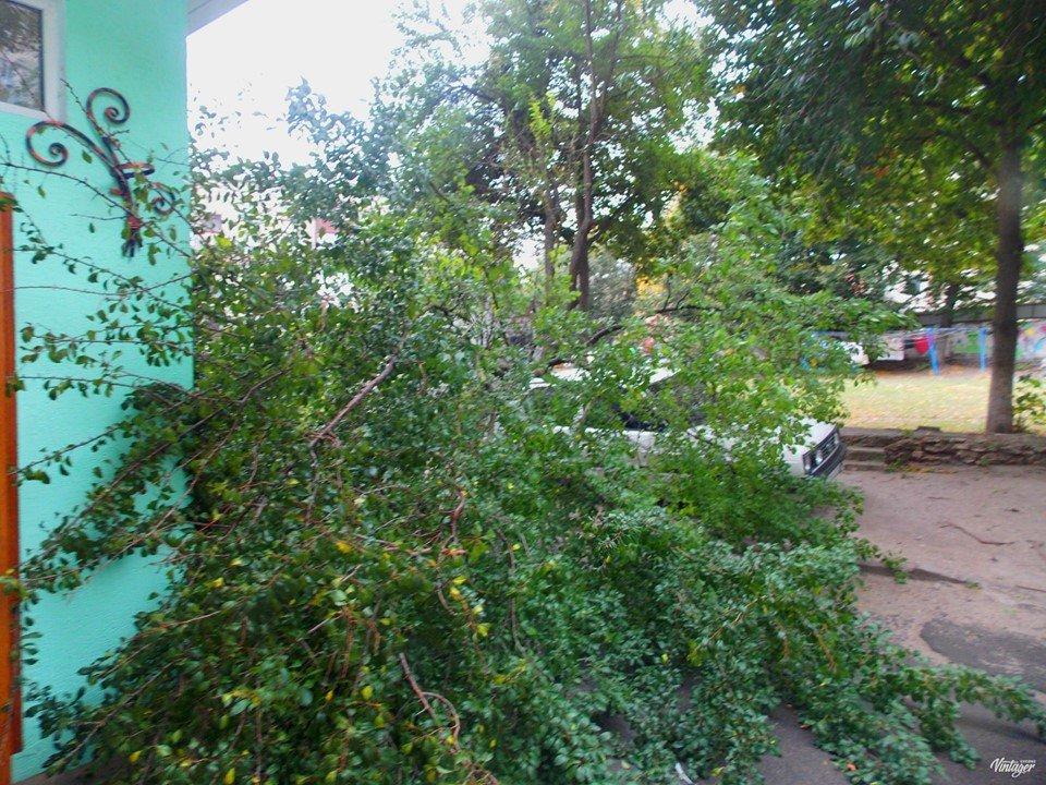 В Острозі сильний вітер зламав дерево яке впало на автомобіль (ФОТО), фото-1
