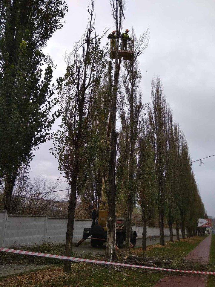 Трест зеленого господарства продовжує покращувати вулиці Рівного (ФОТО), фото-5