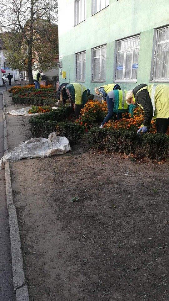 Трест зеленого господарства продовжує покращувати вулиці Рівного (ФОТО), фото-7