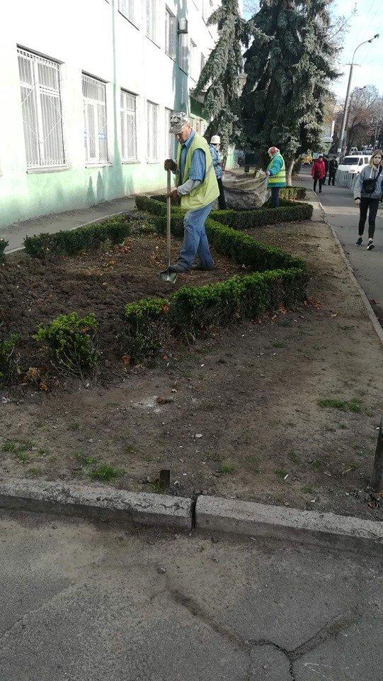 Трест зеленого господарства продовжує покращувати вулиці Рівного (ФОТО), фото-4
