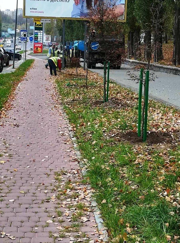 Трест зеленого господарства продовжує покращувати вулиці Рівного (ФОТО), фото-1