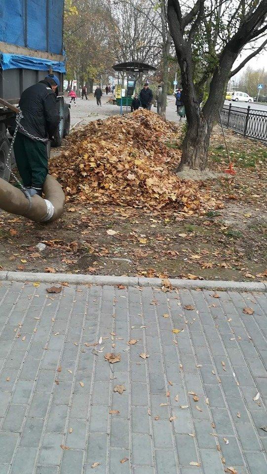 Трест зеленого господарства продовжує покращувати вулиці Рівного (ФОТО), фото-2