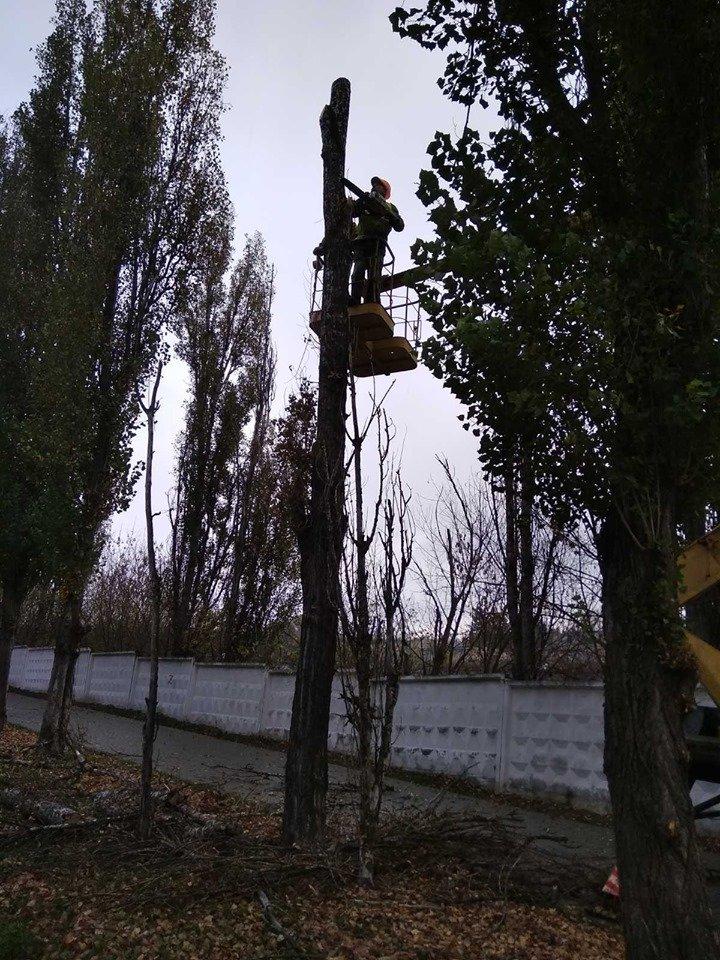 Трест зеленого господарства продовжує покращувати вулиці Рівного (ФОТО), фото-8