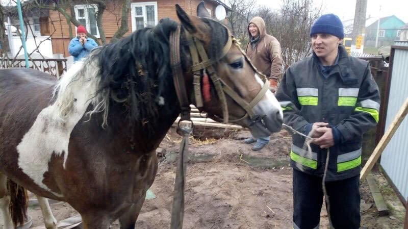 У Рівненському районі кінь провалився у силосну яму: діставали його рятувальники (ФОТО) , фото-1