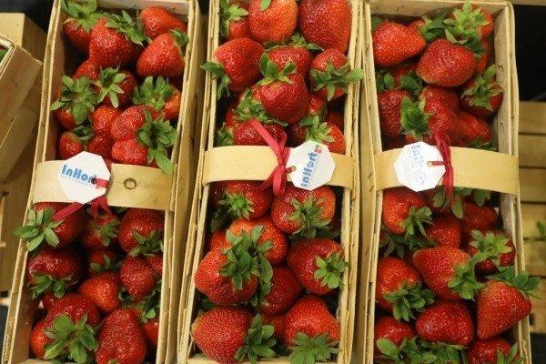 На Рівненщині вирощуватимуть полуницю для продажу за кордон , фото-3