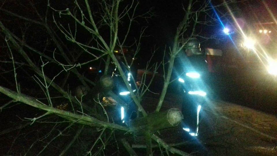 На Рівненщині рятувальники звільняли дорогу від поваленого дерева (ФОТО), фото-3