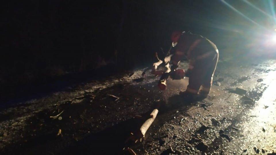 На Рівненщині рятувальники звільняли дорогу від поваленого дерева (ФОТО), фото-4