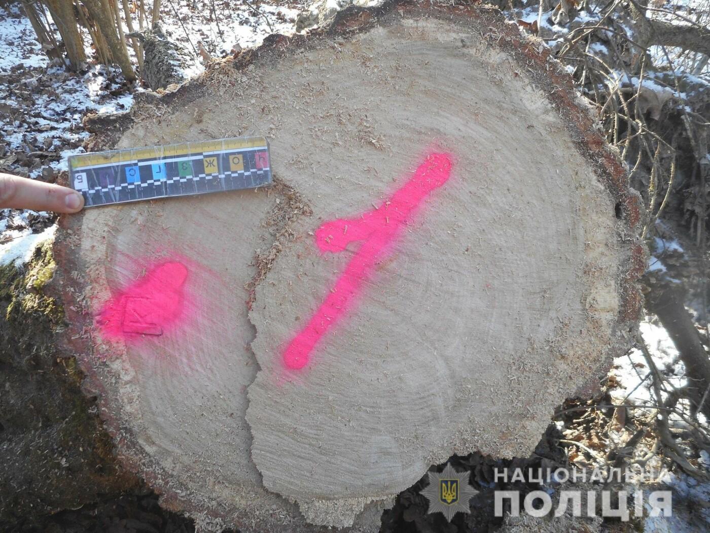 На Рівненщині затримали чоловіка, який крав ліс (ФОТО), фото-2