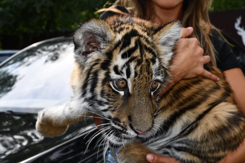 У Рівненський зоопарк привезли нового мешканця (ФОТО), фото-2