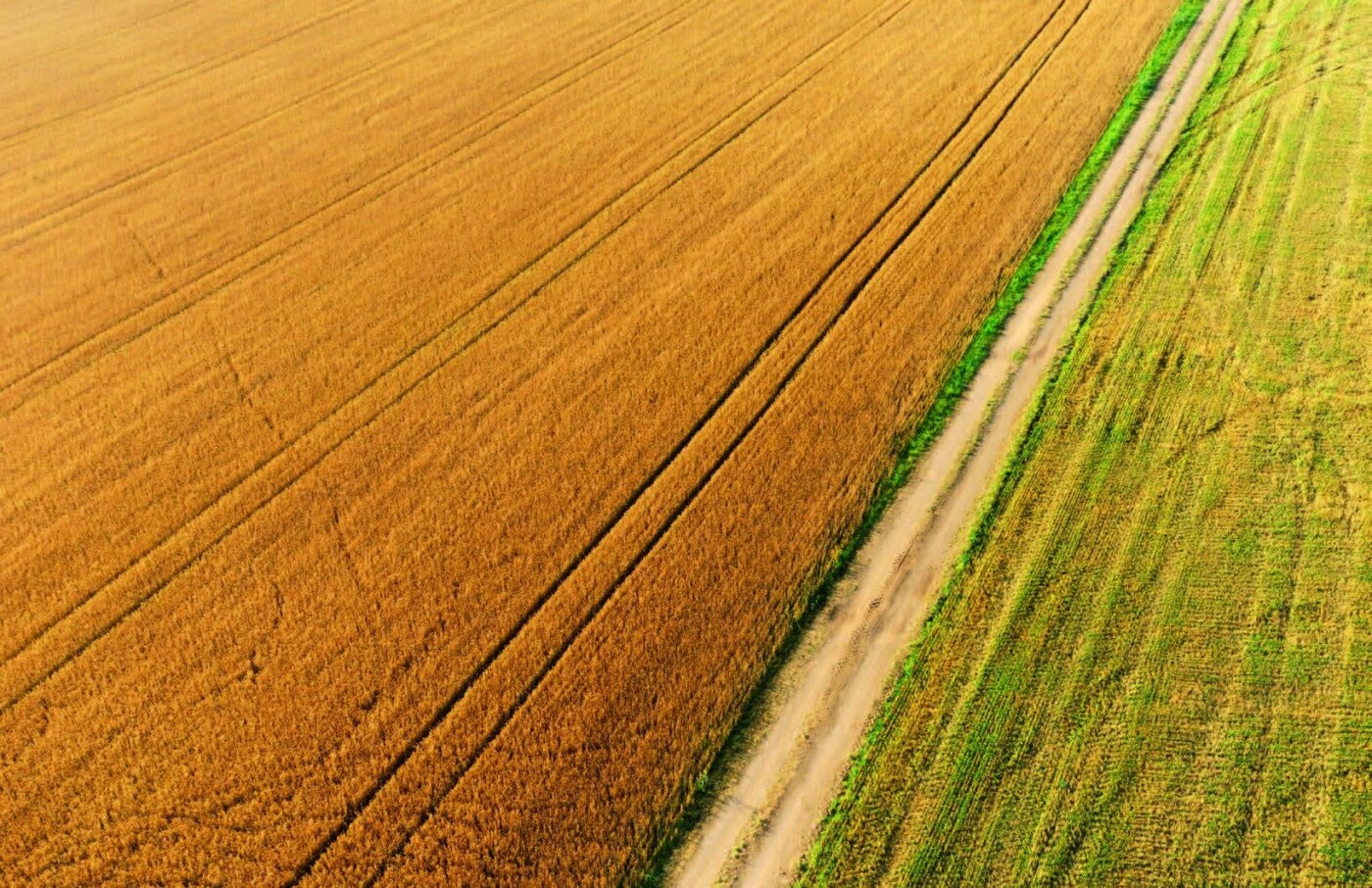 Мішки зерна замість грошей: чому мораторій на продаж землі буксує розвиток сіл Рівненщини , фото-1