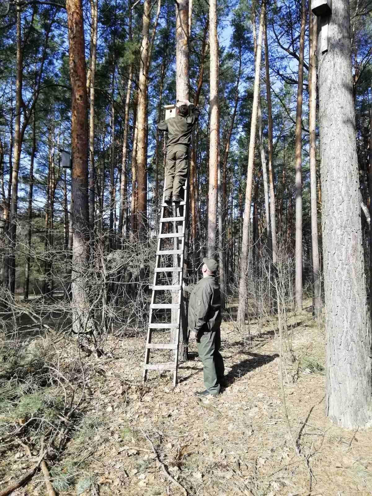 У Костополі лісівники разом з учнями зробили для птахів шпаківні (ФОТО), фото-4