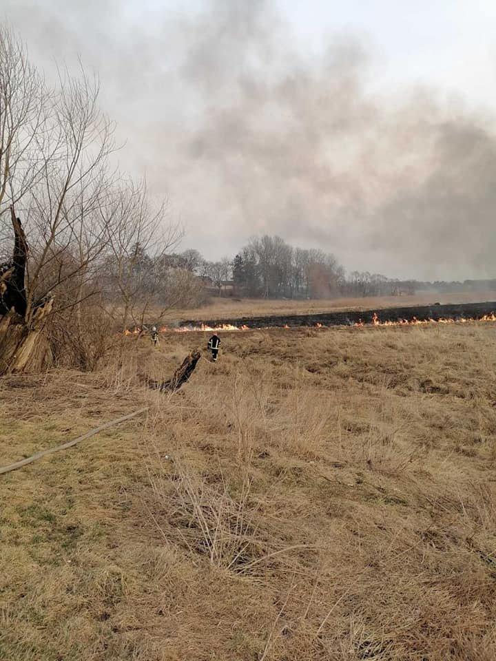 У трьох громадах Рівненської області минулої доби рятувальники боролися з пожежою на полях (ФОТО), фото-5
