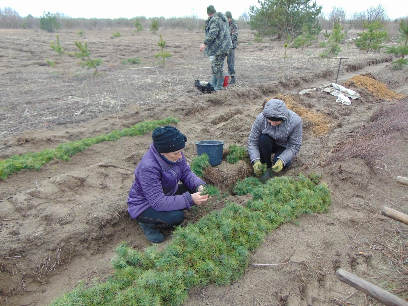 На Рівненщині продовжують висадку дерев: долучилися вчителі з учнями (ФОТО), фото-6