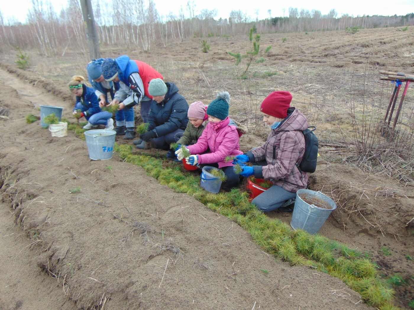 На Рівненщині продовжують висадку дерев: долучилися вчителі з учнями (ФОТО), фото-7