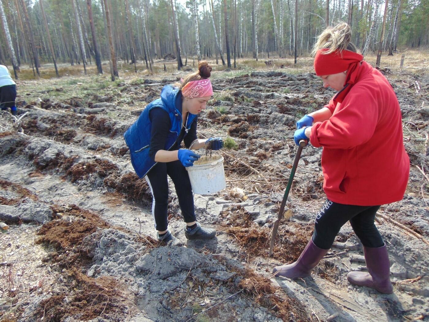 На Рівненщині продовжують висадку дерев: долучилися вчителі з учнями (ФОТО), фото-2