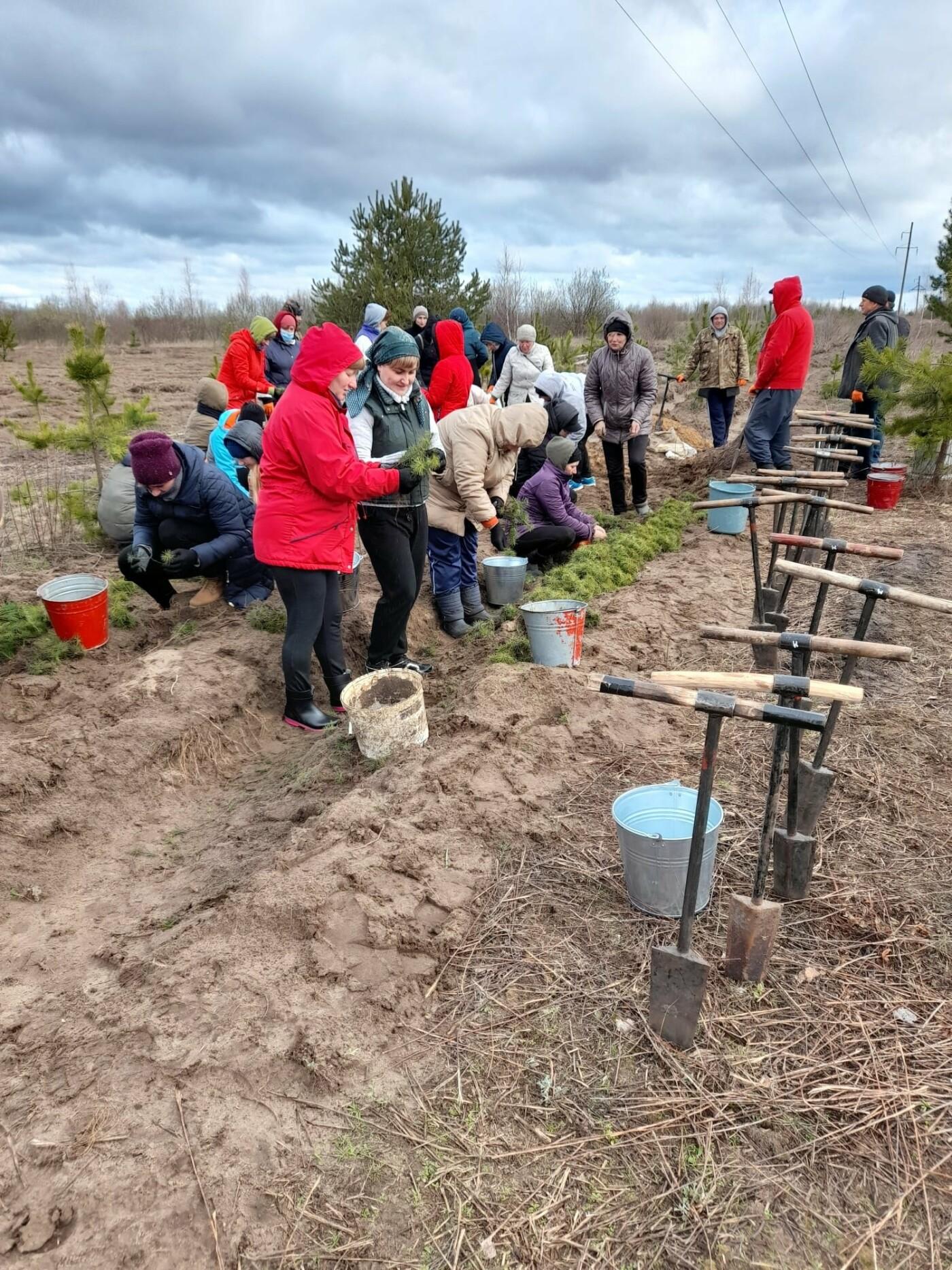 На Рівненщині продовжують висадку дерев: долучилися вчителі з учнями (ФОТО), фото-4