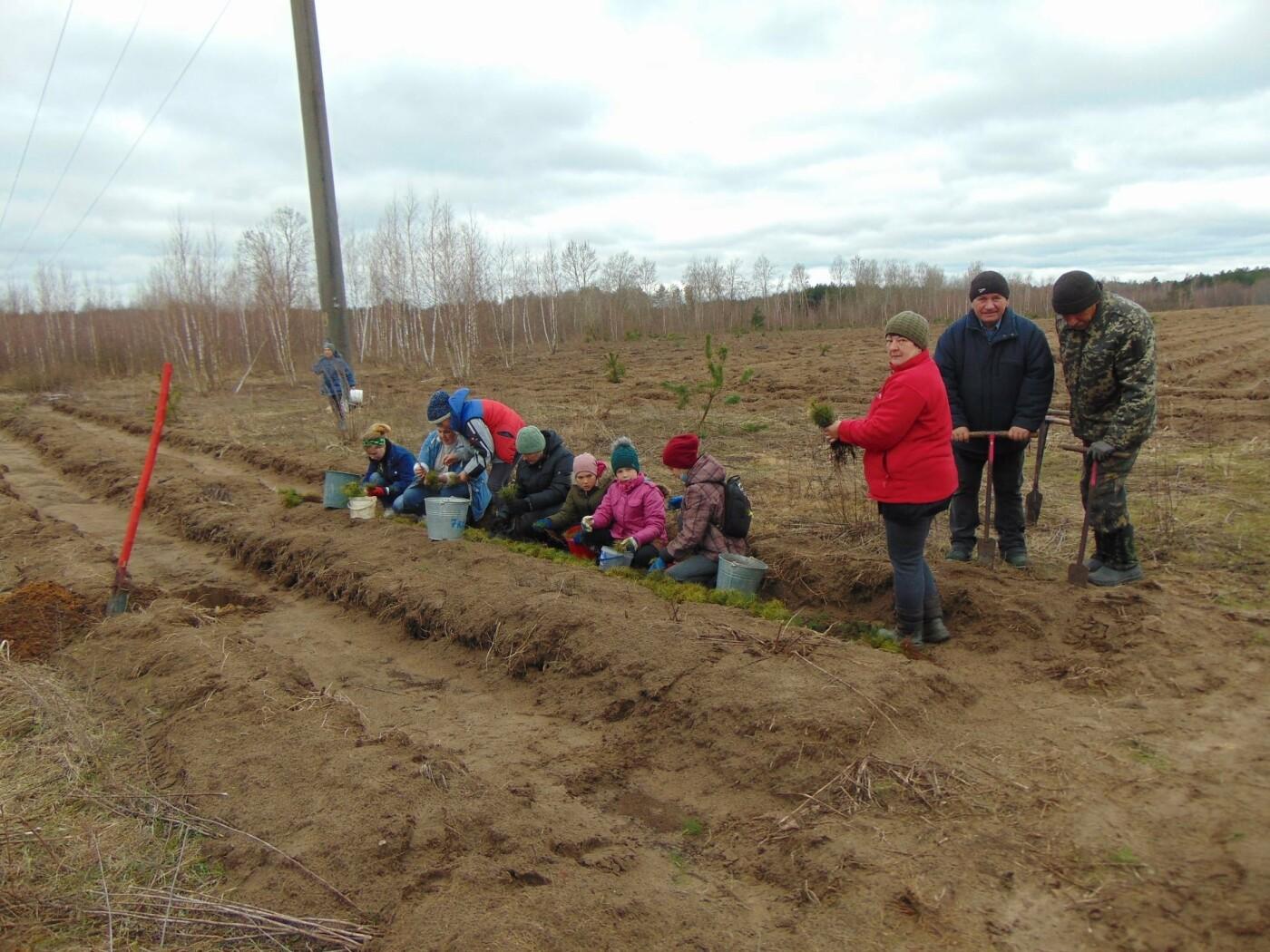 На Рівненщині продовжують висадку дерев: долучилися вчителі з учнями (ФОТО), фото-5