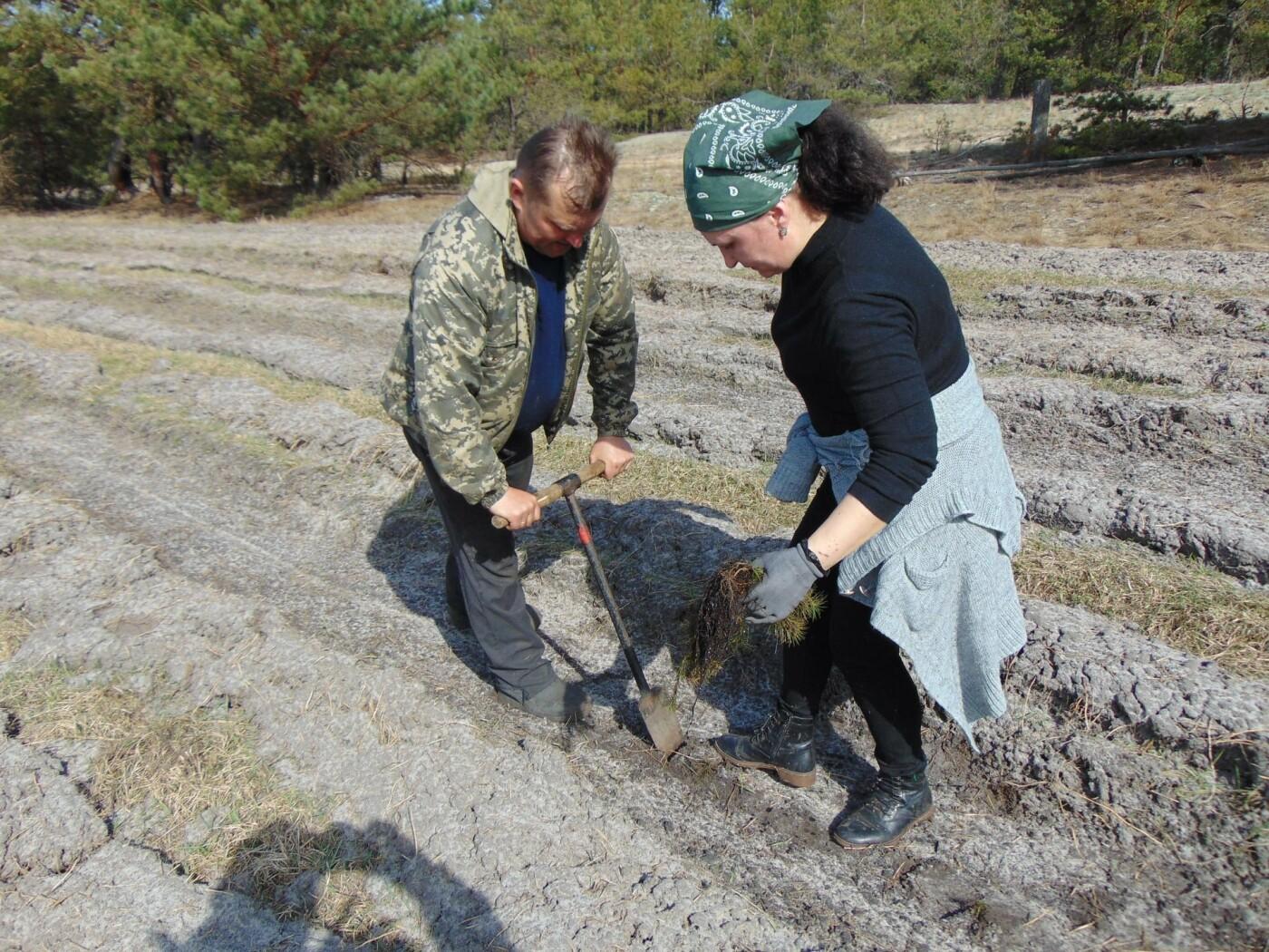 На Рівненщині продовжують висадку дерев: долучилися вчителі з учнями (ФОТО), фото-3