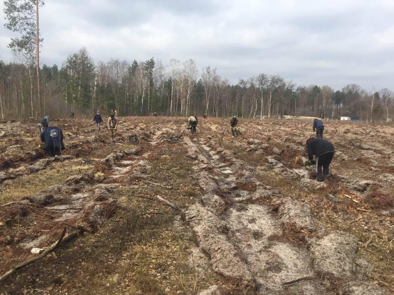 У Рафалівському лісгоспі планують цього року посадити 132 гектари лісу, фото-1