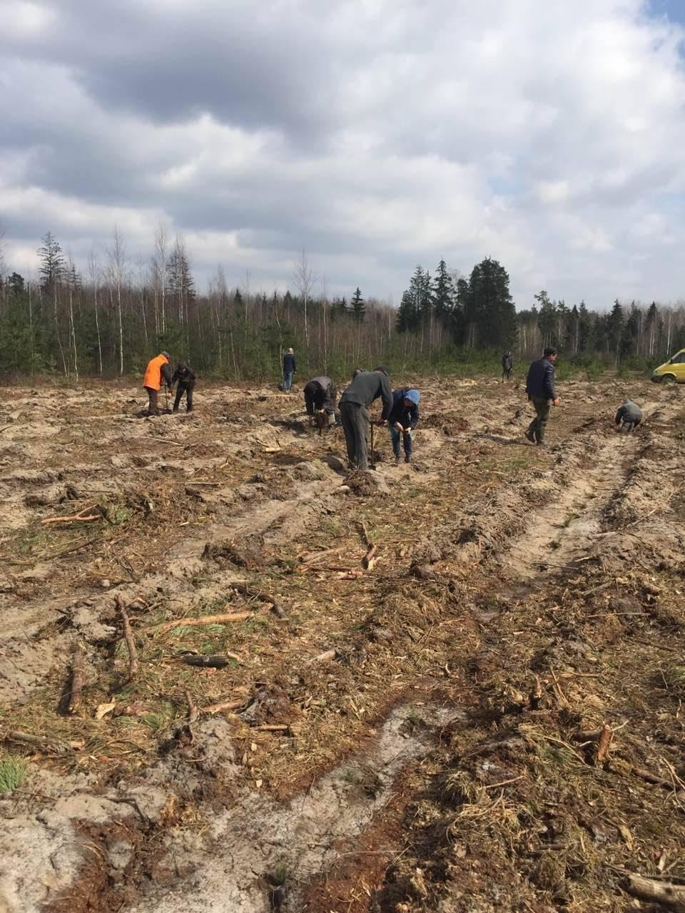 У Рафалівському лісгоспі планують цього року посадити 132 гектари лісу, фото-3