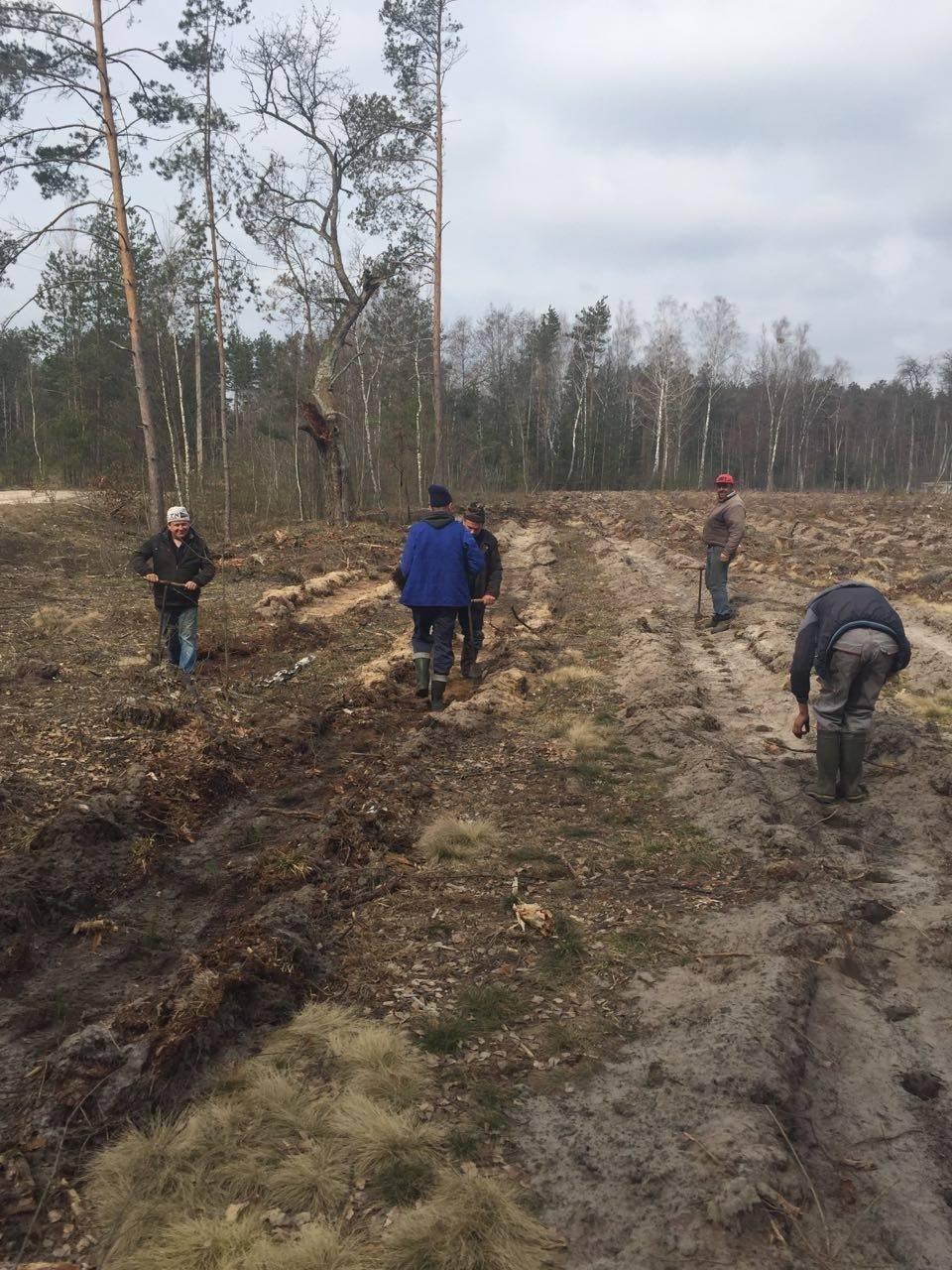 У Рафалівському лісгоспі планують цього року посадити 132 гектари лісу, фото-2