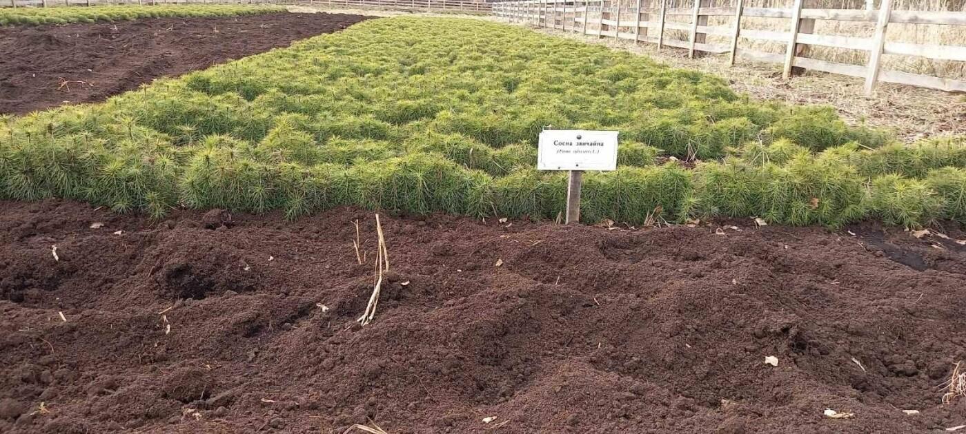 У Рафалівському лісгоспі планують цього року посадити 132 гектари лісу, фото-4