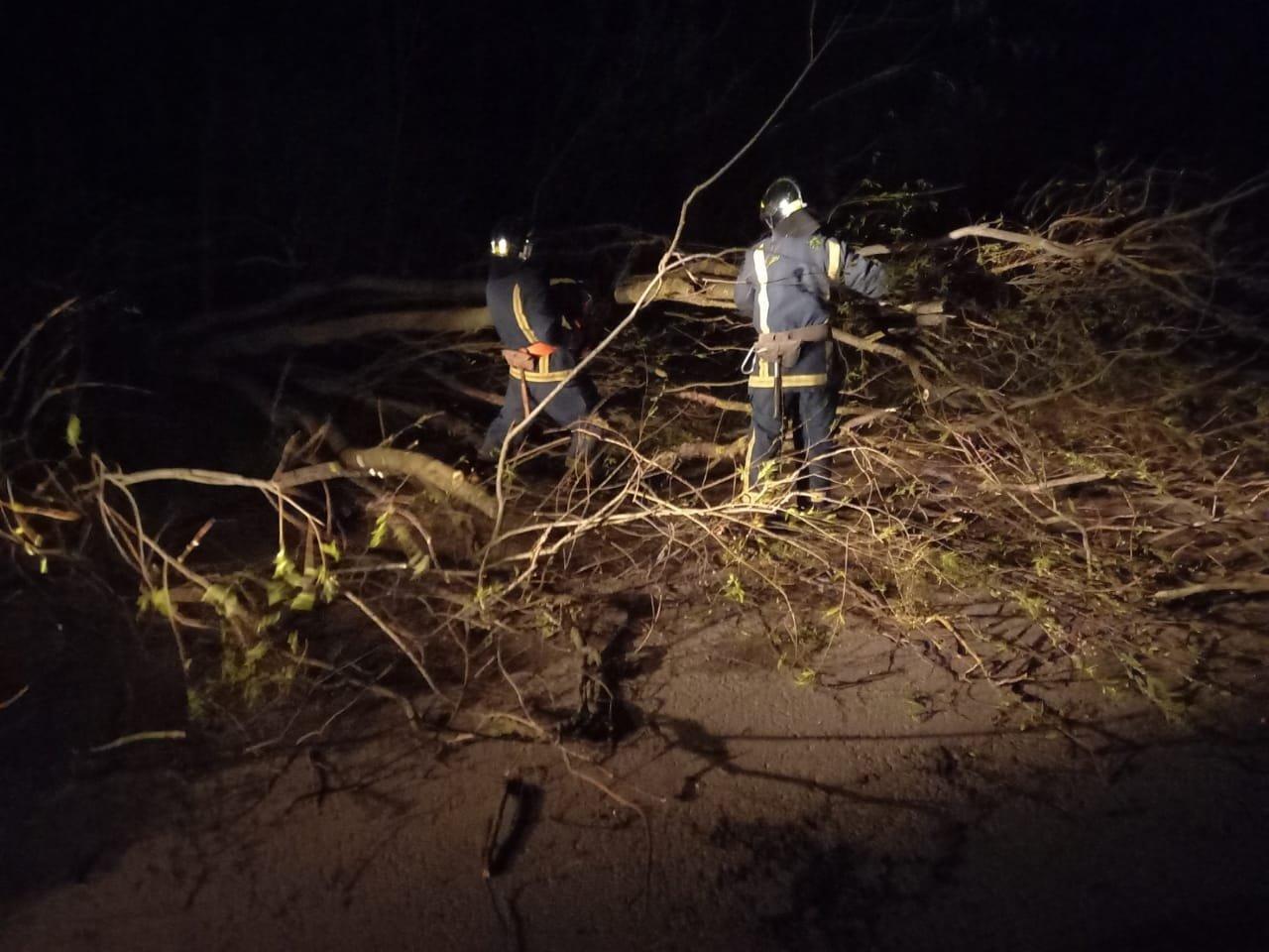 Вечірня негода на Великдень змушувала рятувальників тричі прибирати повалені дерева, фото-6