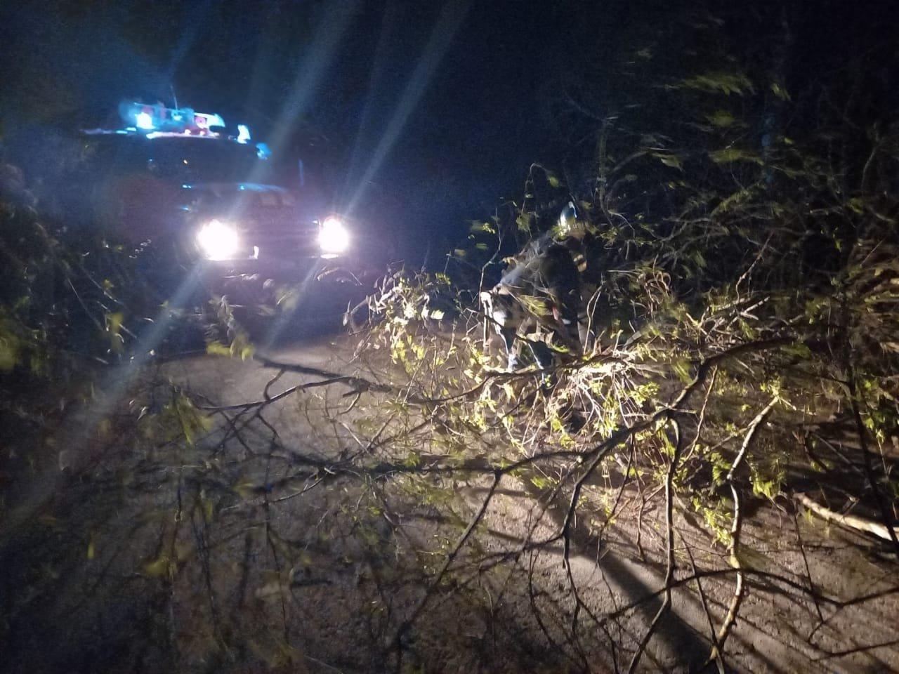 Вечірня негода на Великдень змушувала рятувальників тричі прибирати повалені дерева, фото-5