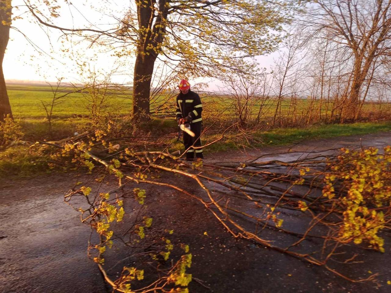 Вечірня негода на Великдень змушувала рятувальників тричі прибирати повалені дерева, фото-1