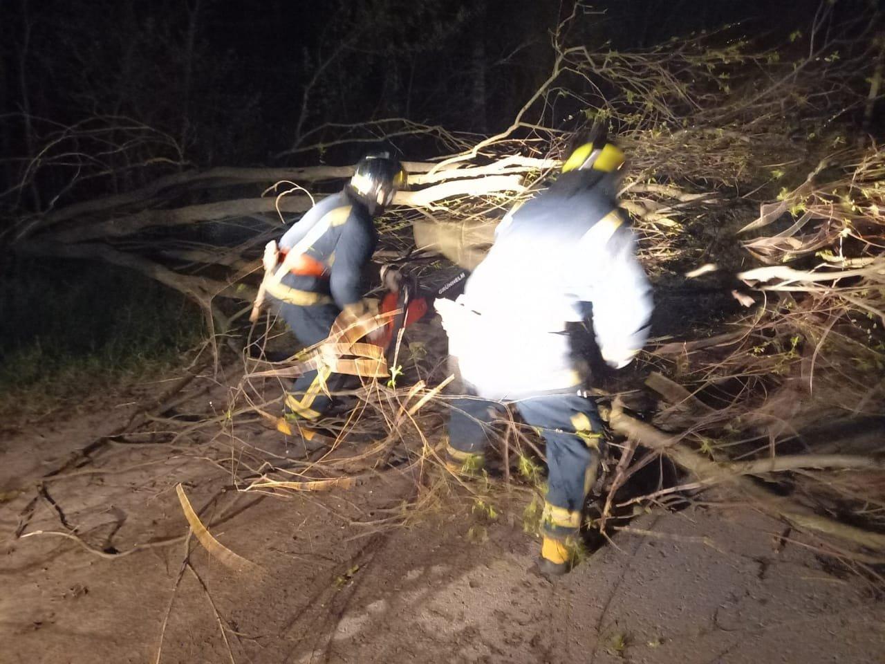 Вечірня негода на Великдень змушувала рятувальників тричі прибирати повалені дерева, фото-4