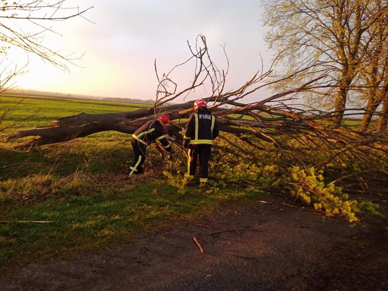 Вечірня негода на Великдень змушувала рятувальників тричі прибирати повалені дерева, фото-3