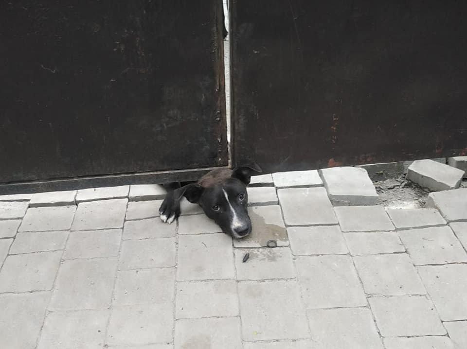 У Рівному пес застряг під металевою огорожею: діставали чотирилапого рятувальники, фото-1