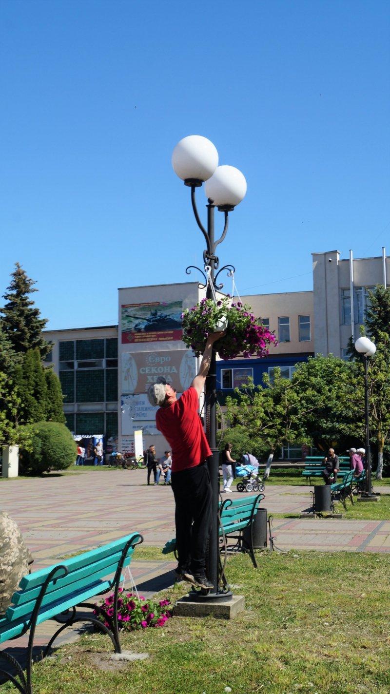 До дня міста Радивилів прикрасили квітами (ФОТО), фото-6