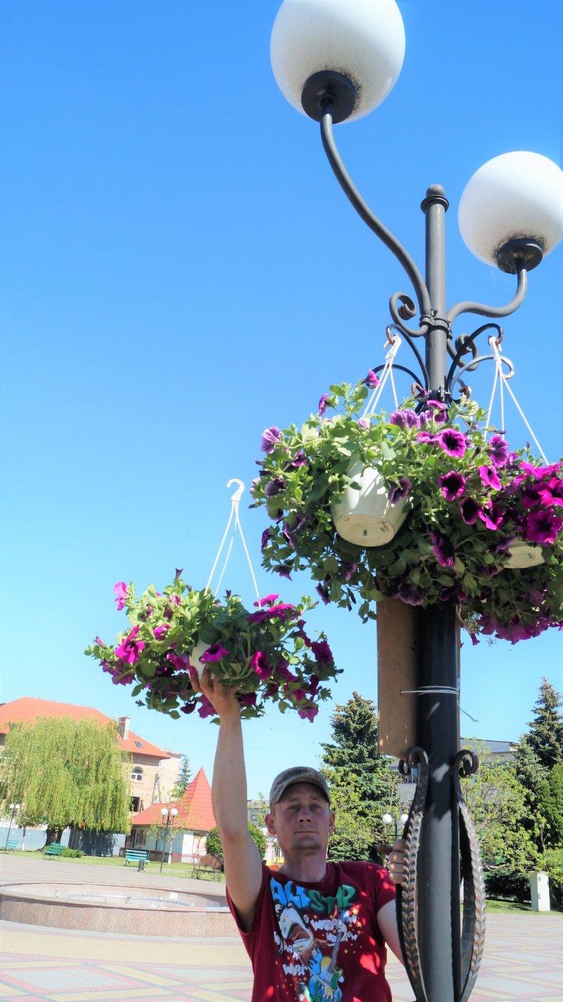 До дня міста Радивилів прикрасили квітами (ФОТО), фото-7