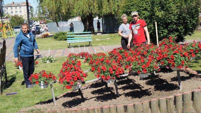 До дня міста Радивилів прикрасили квітами (ФОТО), фото-3