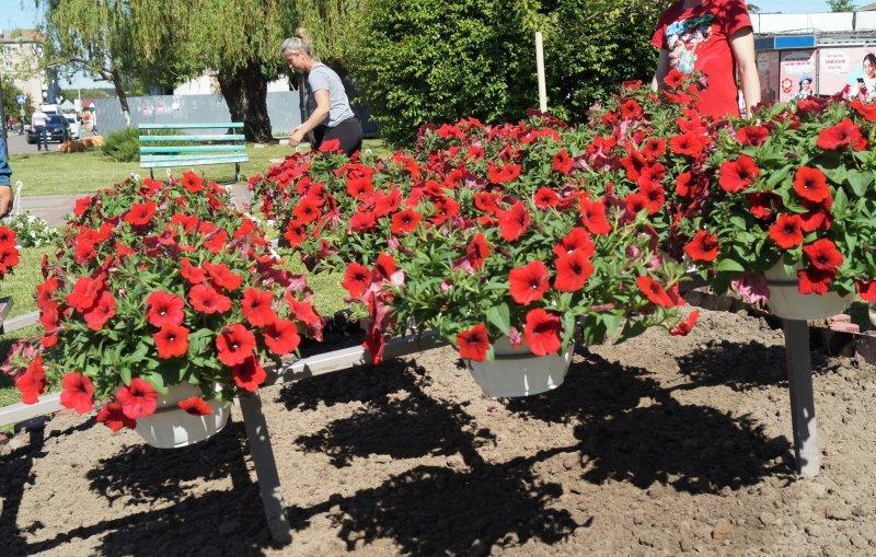 До дня міста Радивилів прикрасили квітами (ФОТО), фото-1